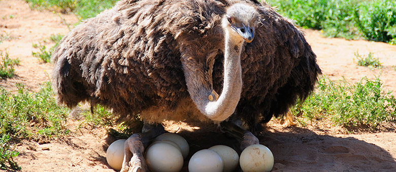 Oudtshoorn Information, activities, Western Cape, South Africa, www.oudtshoorn-info.co.za